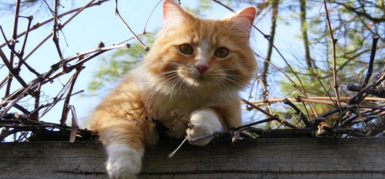 Riportare il gatto a casa dopo che è scappato