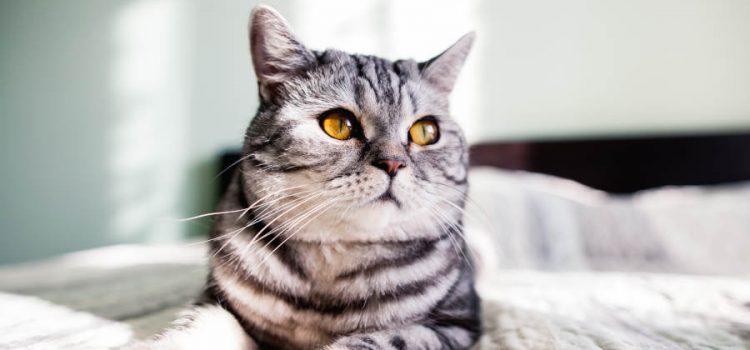 Pip archivi il veterinario comportamentalista - Pipi sul divano ...